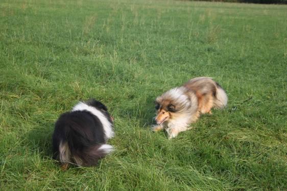 spielen im Gras
